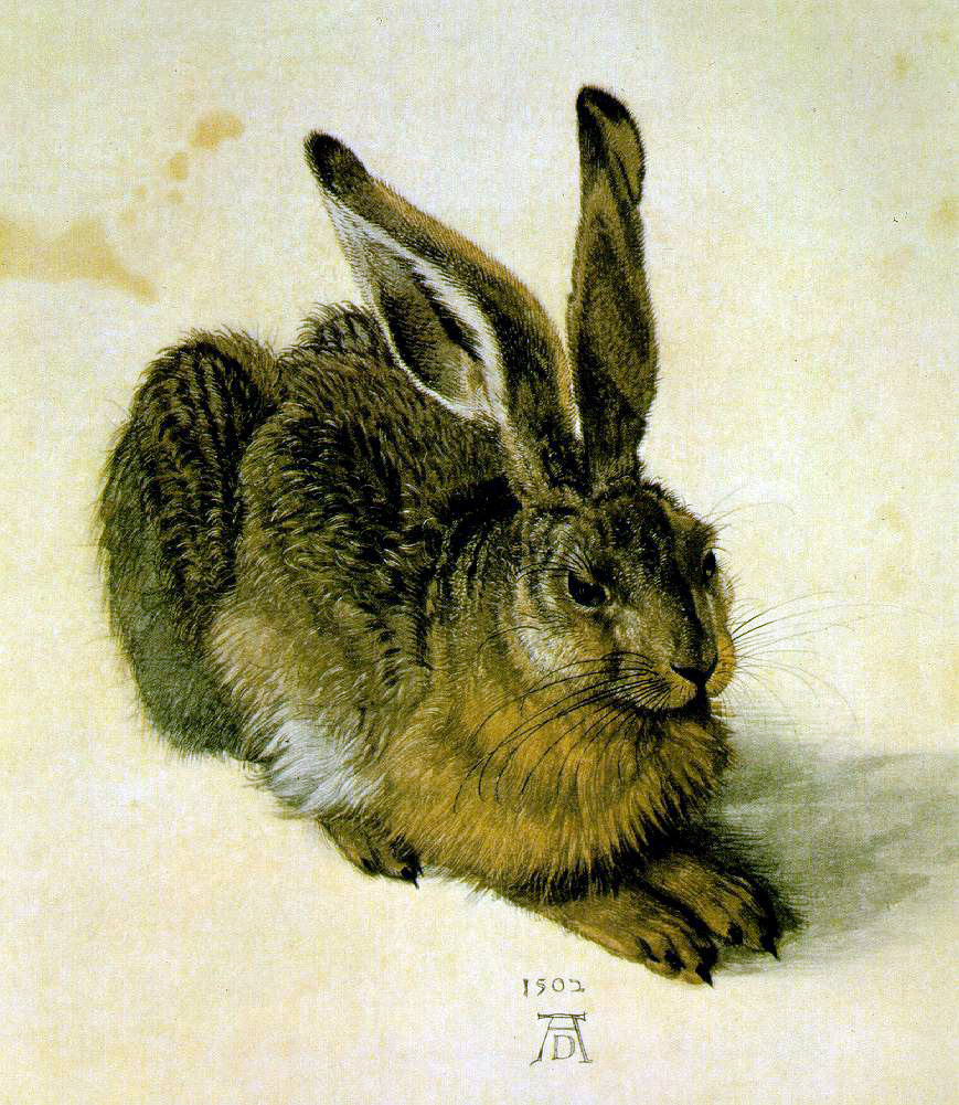 Durer's A Young Hare